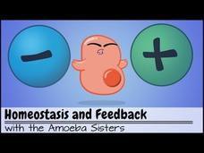 Homeostasis and Negative/Positive Feedback Video