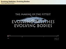 Stickleback Film with Quiz: Evolving Switches, Evolving Bodies Video