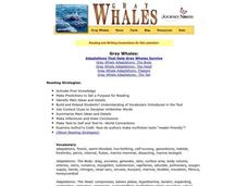 Gray Whales Lesson Plan