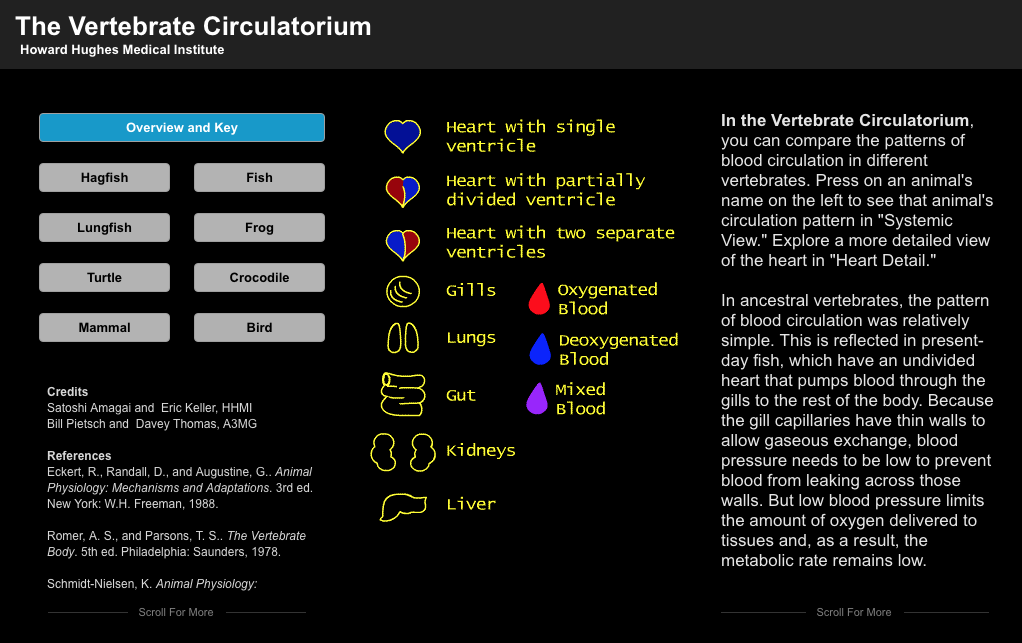 Vertebrate Circulatorium Interactive