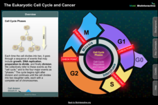 The Eukaryotic Cell Cycle and Cancer Interactive