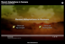 Recent Adaptations in Humans Interactive