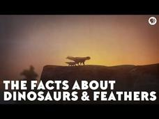 The Facts About Dinosaurs and Feathers Video
