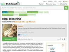 Coral Bleaching Video