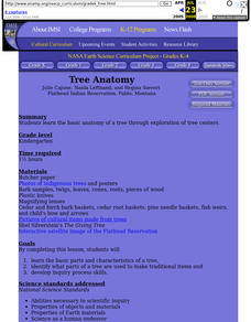 Tree Anatomy Lesson Plan