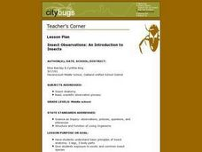 Insect Observations: An Introduction To Insects Lesson Plan