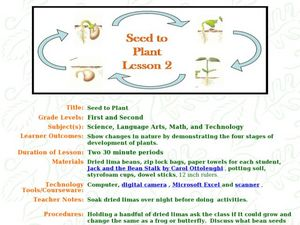 Seed To Plant Lesson Plan