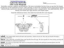 Label the Butterfly Life Cycle Diagram Worksheet