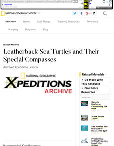 Leatherback Sea Turtles and Their Special Compasses Lesson Plan