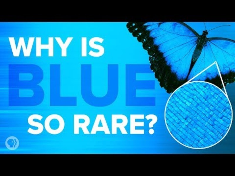 Why Is Blue so Rare in Nature? Video