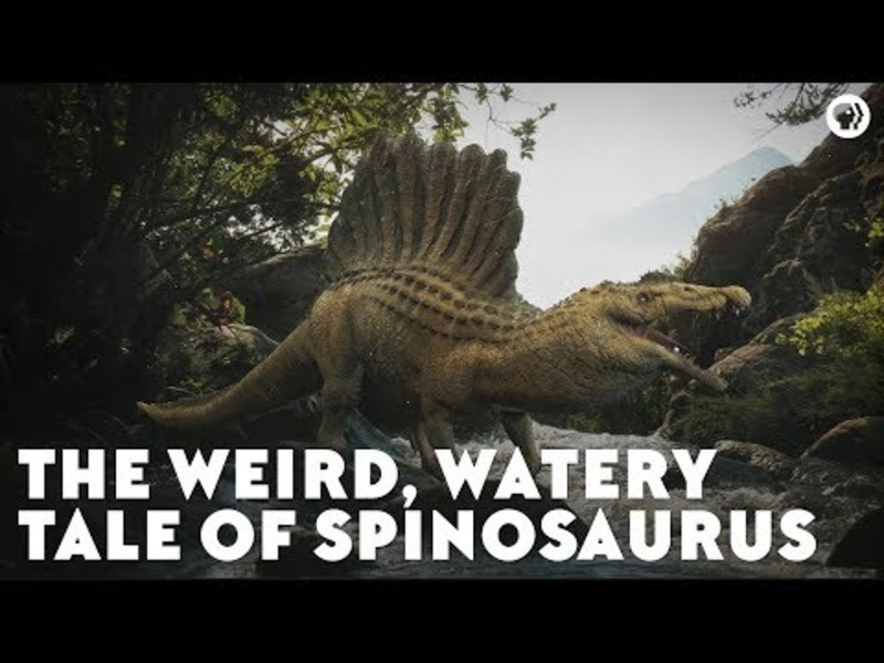 The Weird, Watery Tale of Spinosaurus Video