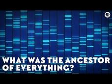 What Was the Ancestor of Everything? Video