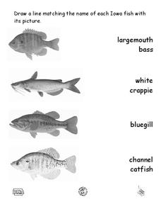 Iowa Fish Families Matching Worksheet