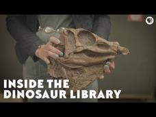 Inside the Dinosaur Library Video