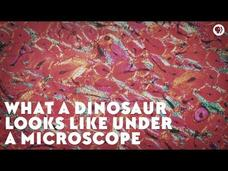 What a Dinosaur Looks like under a Microscope Video