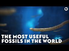 The Most Useful Fossils in the World Video