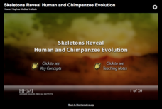 Skeletons Reveal Human and Chimpanzee Evolution Interactive