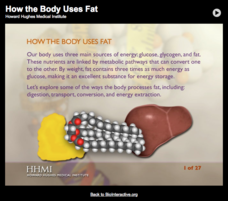 How the Body Uses Fat Interactive