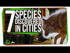 7 New Species Discovered in Cities Video