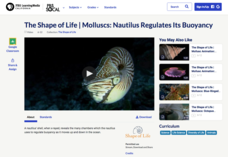 Molluscs: Nautilus Regulates Its Buoyancy Video