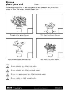 Helping Plants Grow Well Worksheet