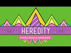 Heredity Video
