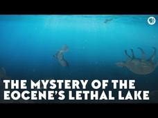 The Mystery of the Eocene's Lethal Lake Video