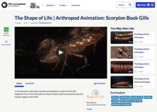 Arthropod Animation: Scorpion Book Gills Video