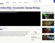 Cristina Diaz, Taxonomist: Sponge Biology Video