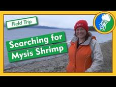 Searching for Mysis Shrimp - Field Trip Video