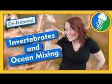 Invertebrates and Ocean Mixing - De-Natured Video