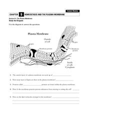 Homeostasis and the Plasma Membrane Worksheet