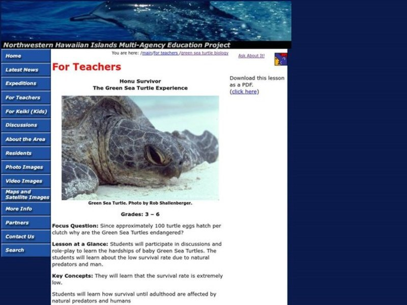 Honu Survivor: The Green Sea Turtle Experience Lesson Plan