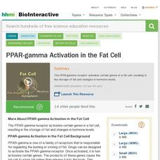 PPAR-gamma Activation in the Fat Cell Video