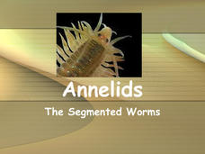 Annelids: The Segmented Worms Presentation