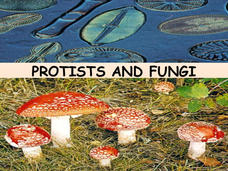 Protists and Fungi Presentation