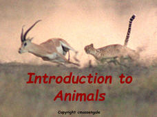 Introduction to Animals Presentation