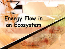 Energy Flow in an Ecosystem Presentation