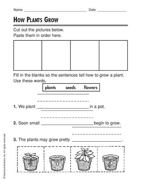how plants grow worksheet for 2nd grade lesson planet. Black Bedroom Furniture Sets. Home Design Ideas