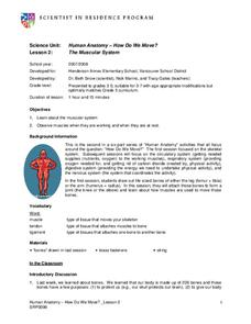 Human Anatomy- How Do We Move? Lesson Plan