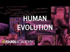 Human Evolution Overview Video