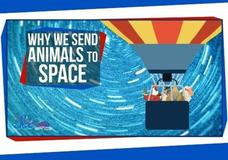 Why We Send Animals to Space Video