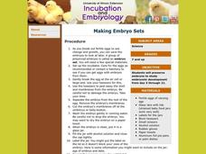 Making Embryo Sets Lesson Plan