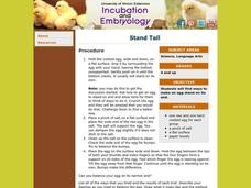 Stand Tall Lesson Plan