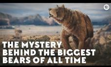 The Mystery behind the Biggest Bears of All Time Video