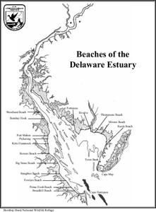 Beaches of the Delaware Estuary Lesson Plan