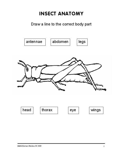 Insect Anatomy Worksheet - lovesongdesigns