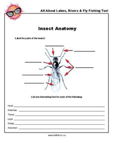 Insect Anatomy Worksheet