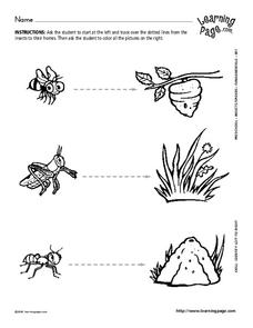 Insect Homes Worksheet