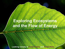 Breaking Down Ecosystems